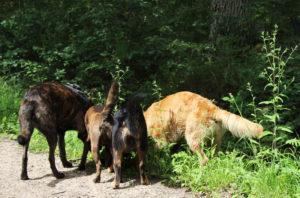 Mon chien est agressif avec les autres chiens… Les 4