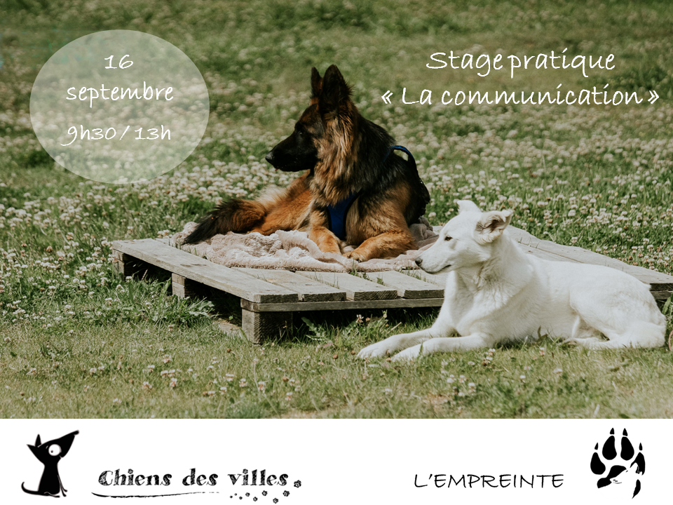 affiche Stage la communication septembre 2017